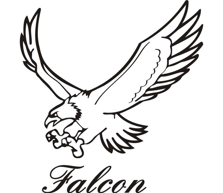 736x638 Peregrine Falcon Clipart Drawing
