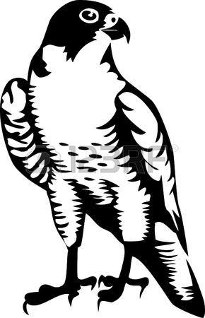 290x450 Falcon Logo Royalty Free Cliparts, Vectors, And Stock Illustration