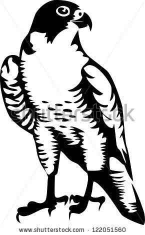 Falcons Clipart