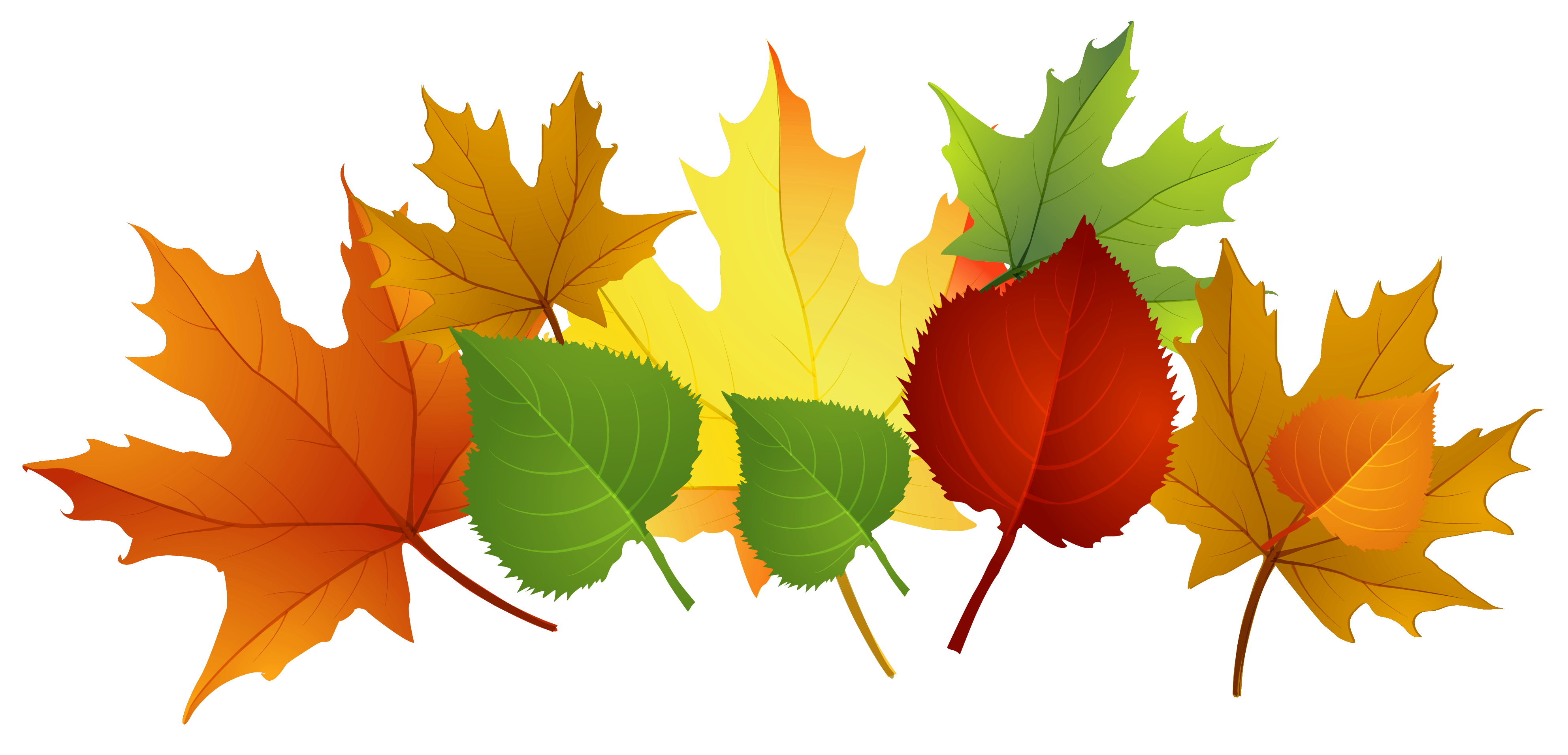 3969x1910 Fall Leaves Transparent Background Clipart