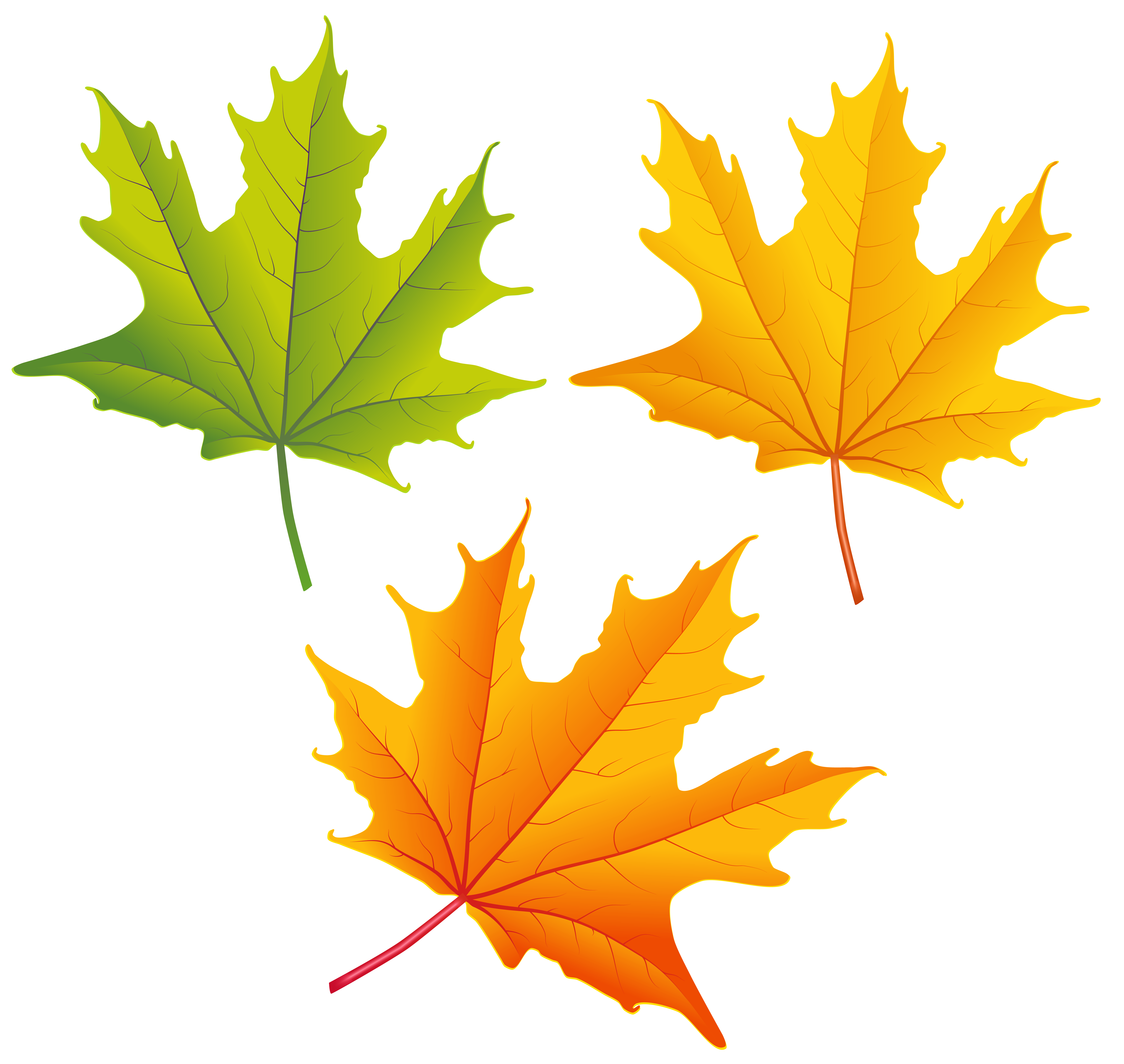 6312x5975 Top 80 Autumn Leaf Clip Art
