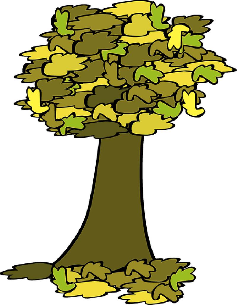 800x1030 Fall, Tree, Coloured, Acorn, Cartoon, Trees, Plant