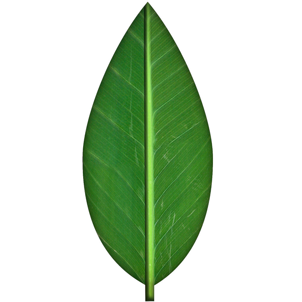 1024x1024 Leaves Transparent Background Clipart 2229721
