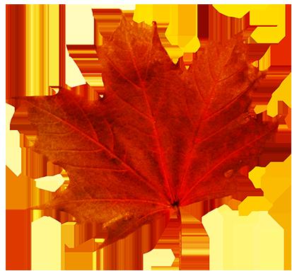 413x383 Maple Leaf Clipart Transparent