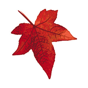300x300 Maple Leaf Clipart Winter Leaves