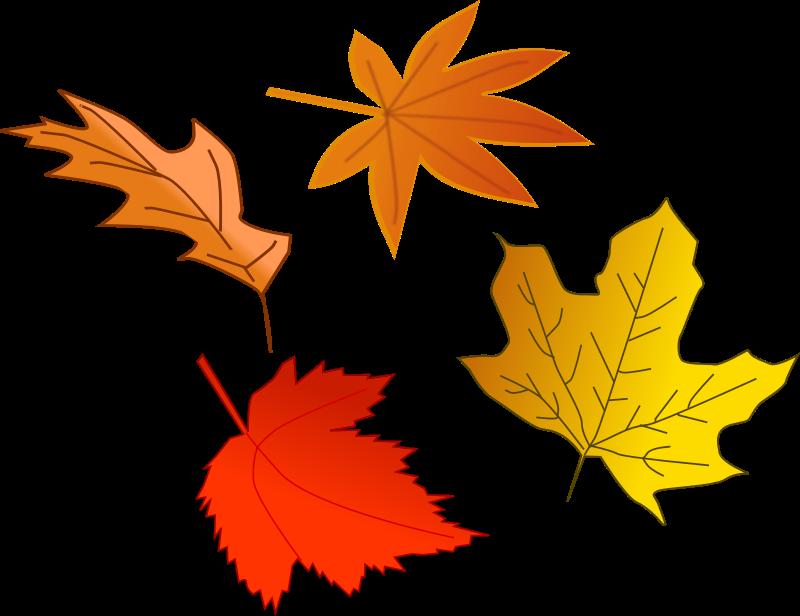 800x616 Maple Leaf Clipart Transparent Background Collection