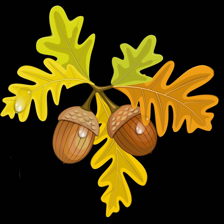 3000x3000 Acorn Leaf Clipart Amp Acorn Leaf Clip Art Images