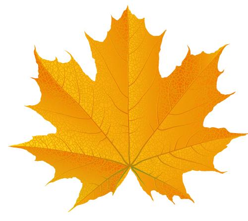 500x445 How To Draw A Fall Leaf Using Adobe Illustrator