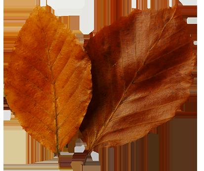 413x347 Leaf Fall Leaves Clip Art Beautiful Autumn Clipart 2