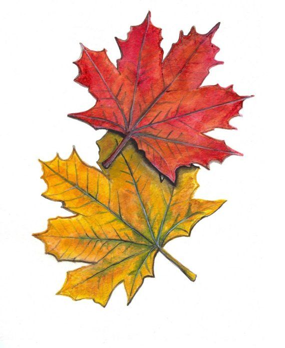 570x695 Maple Leaf Clipart Fall Decoration