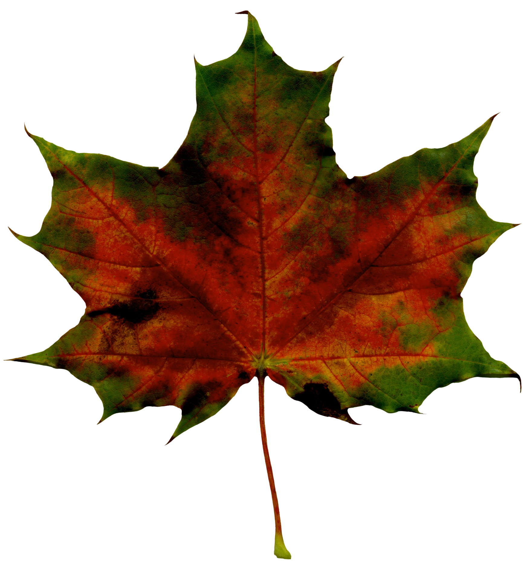 1750x1870 Red Fall Leaf Png Clipart Imageu200b Gallery Yopriceville
