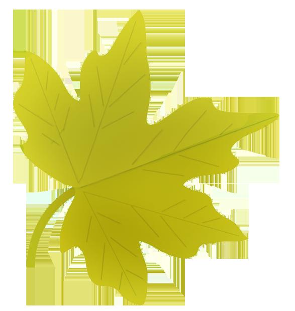 587x620 Drawn Leaves Autumn Leaf
