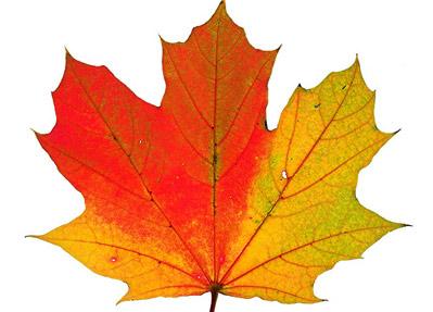399x287 Fall Foliage Map Jaunted Rug Hooking Leaves