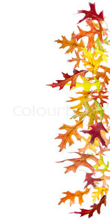 160x320 Autumn Leaves Falling To The Ground Isolated On White Stock