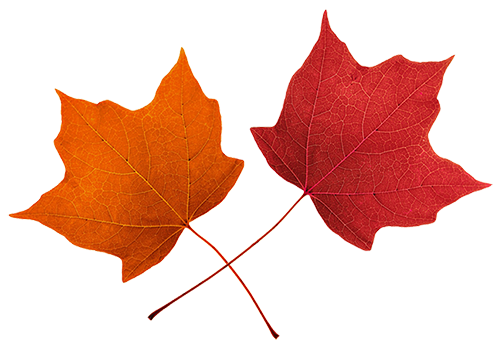 502x353 Fall Leaves Clip Art Clipart Image