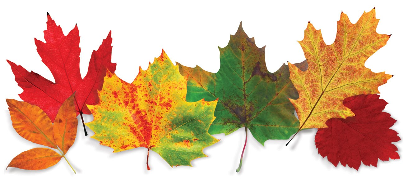 Fall Leaves Images