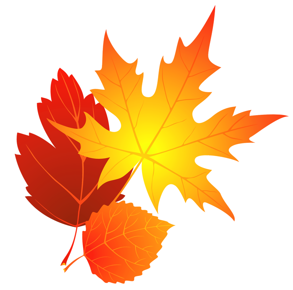 994x985 Transparent Fall Leaves Clipart 0