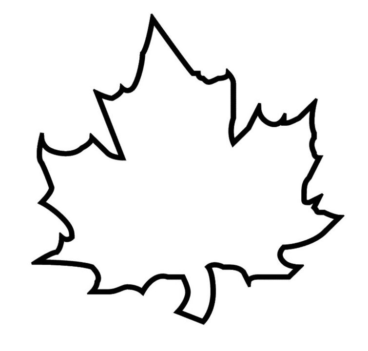 755x720 Maple Leaf Outline Clipart 3