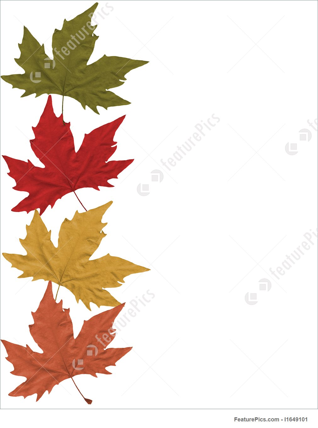 Border Clipart Clipartsgram Fall Coloring Page 1011x1360 Leaves Stock Photo I1649101