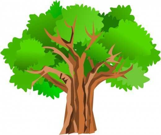 520x434 Fall Oak Tree Clipart 101 Clip Art On Oak Tree Clipart
