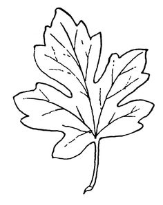 236x298 Cute Fall Leaf Clipart Black And White