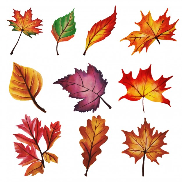 626x626 Falling Leaves Vectors, Photos And Psd Files Free Download