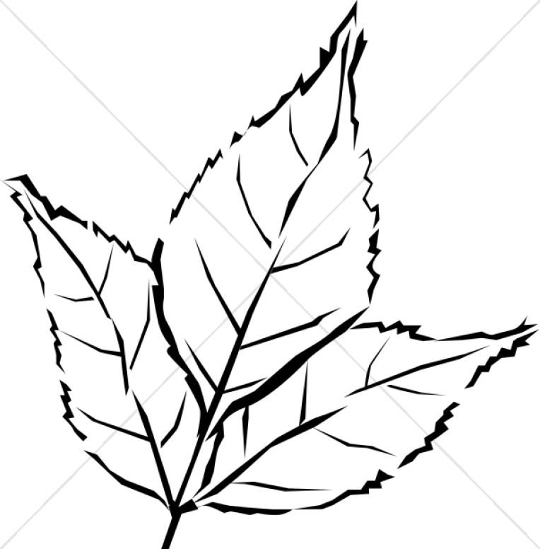 764x776 Woodcut Style Tri Leaf Leaf Clipart