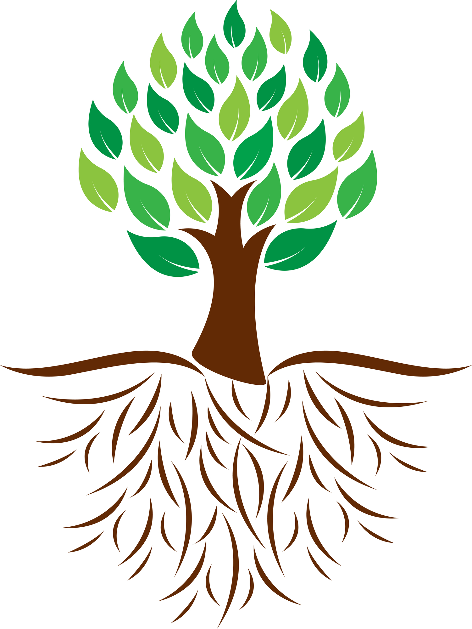 1501x1998 Roots Clipart Tree Png