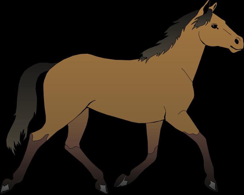 800x641 Horse Free Vector 4vector