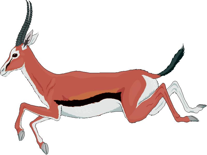 800x600 Top 88 Gazelle Clip Art