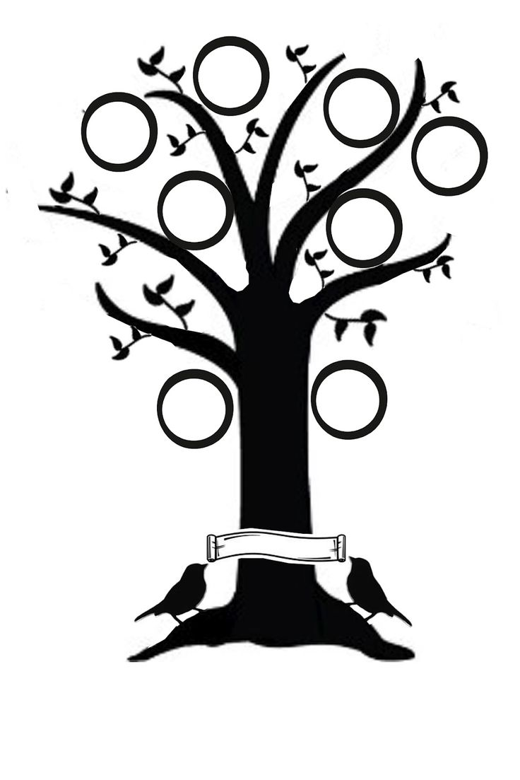 736x1103 Tree Drawing Clip Art