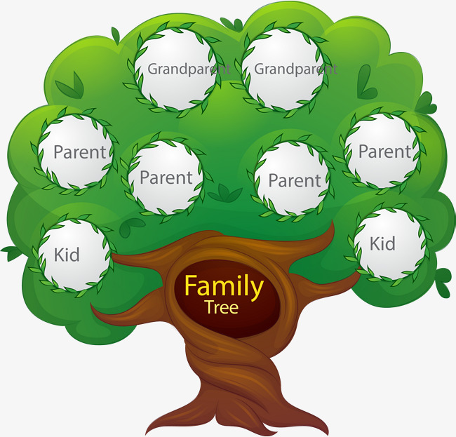 650x623 Family Tree Png Images Vectors And Psd Files Free Download