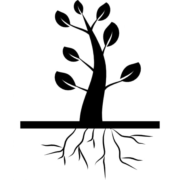626x626 Tree Roots Vectors, Photos And Psd Files Free Download
