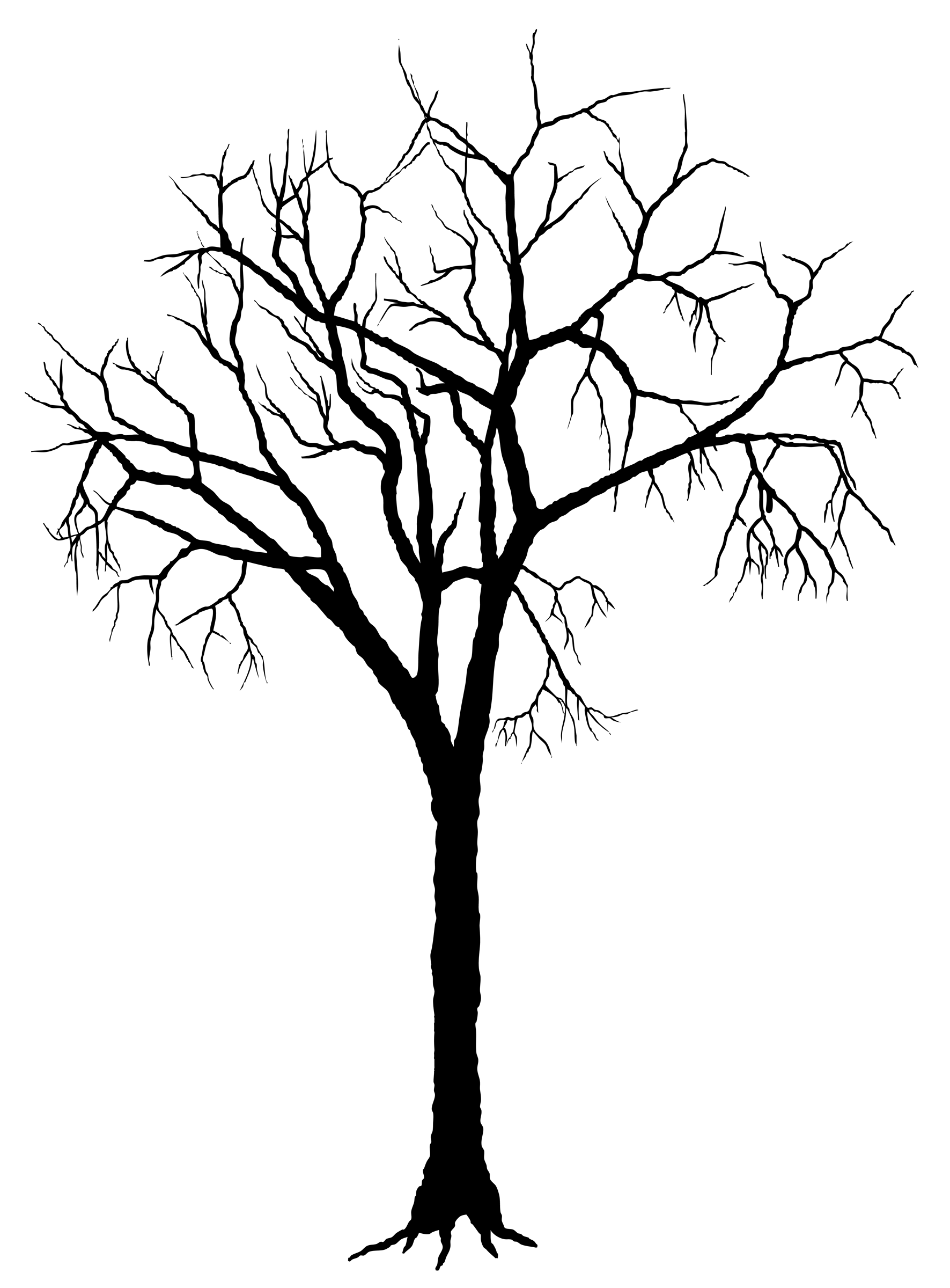 1771x2400 Roots Clipart Empty Tree