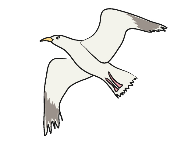 640x480 Gull Feathers Clipart