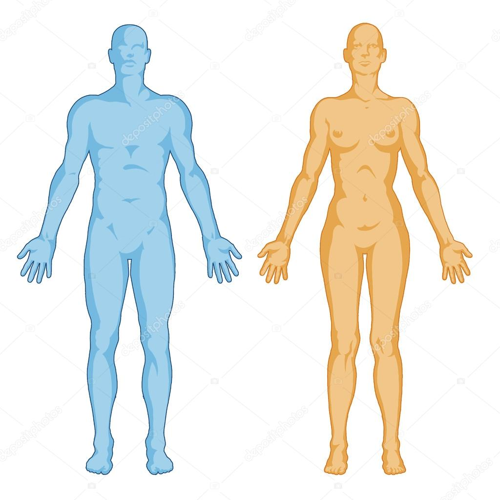 1024x1024 Female Male Body Shapes Human Body Outline