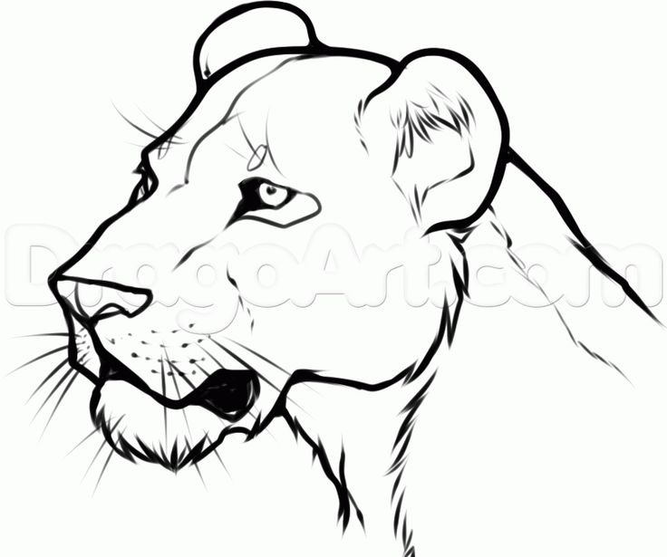Female Lion Clipart