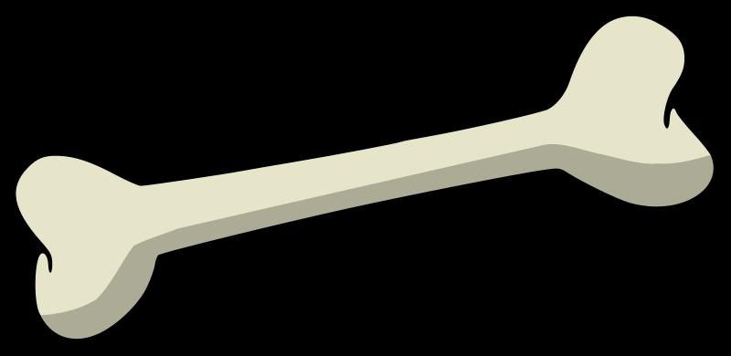 800x390 Realistic Clipart Bone