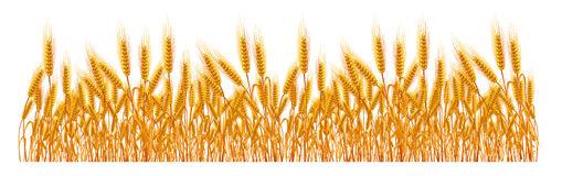 509x160 Grain Clipart Field Wheat