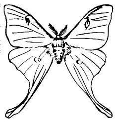 236x247 Moth Sketch