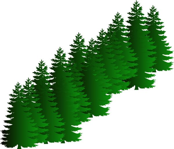 Fir Tree Clipart