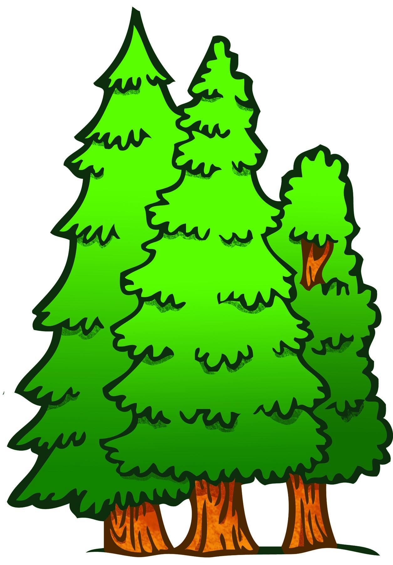 1255x1800 Fir Tree Clipart Forest Tree