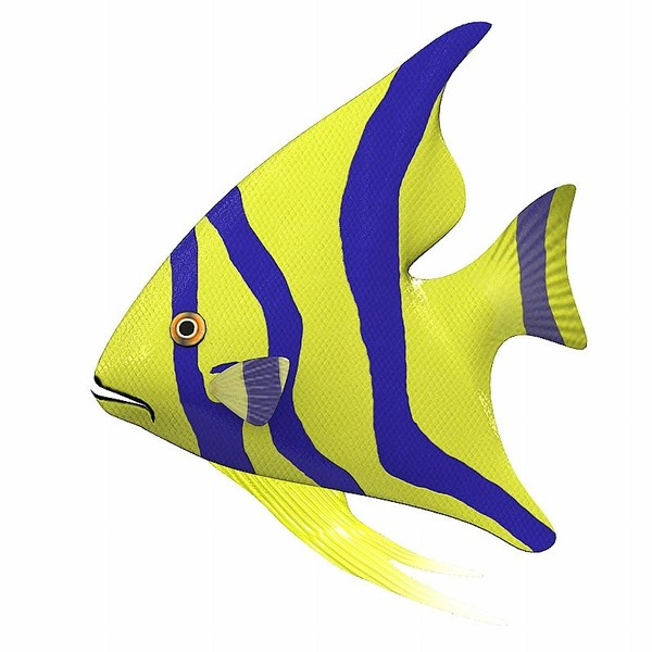600x600 Fish Animated Pictures