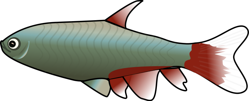 800x325 Animated Fish Clipart Clipart