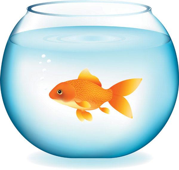 600x569 Fish Bowl Clipart Golden Fish