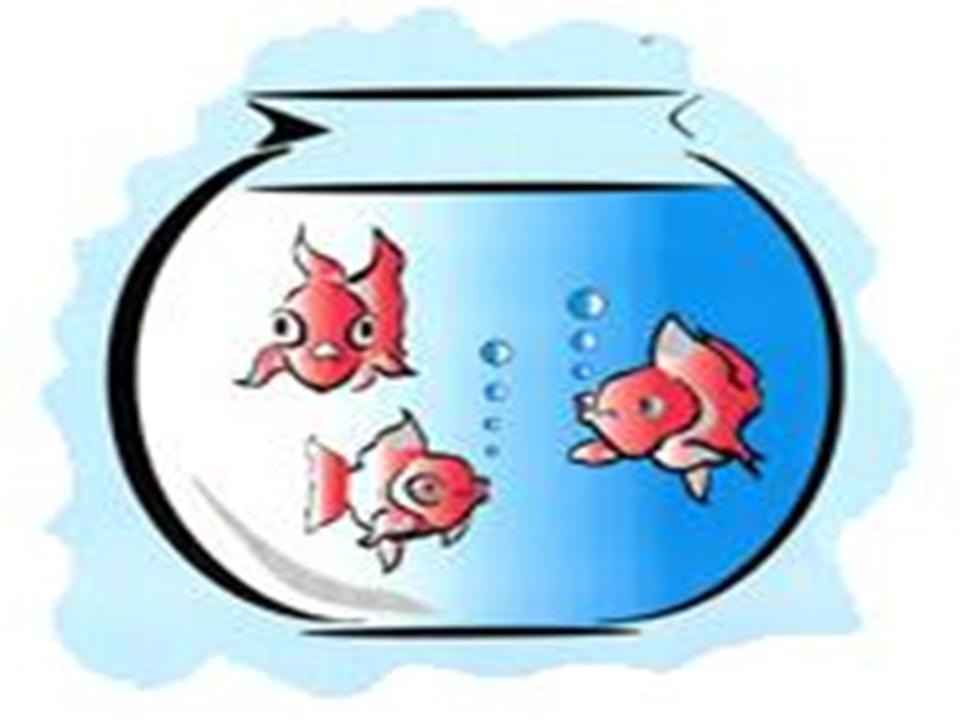 960x720 Fish Bowl Clip Art Clipart 2