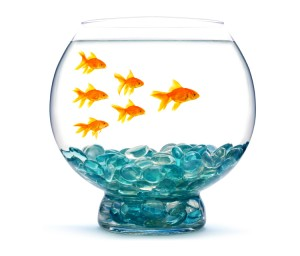 300x256 Don#39t Bump The Fishbowl The Purposeful Culture Group