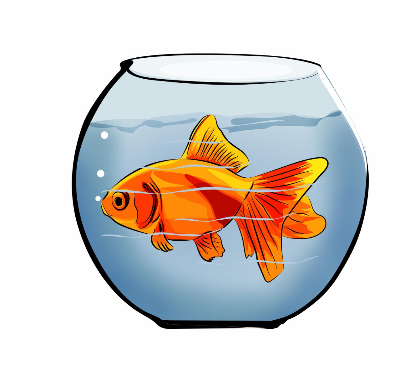 1343x1200 Fish Bowl