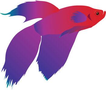 350x297 Betta Fish Clip Art