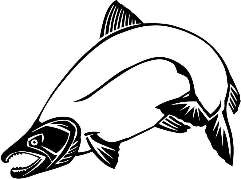 784x584 Chinook Salmon Clip Art